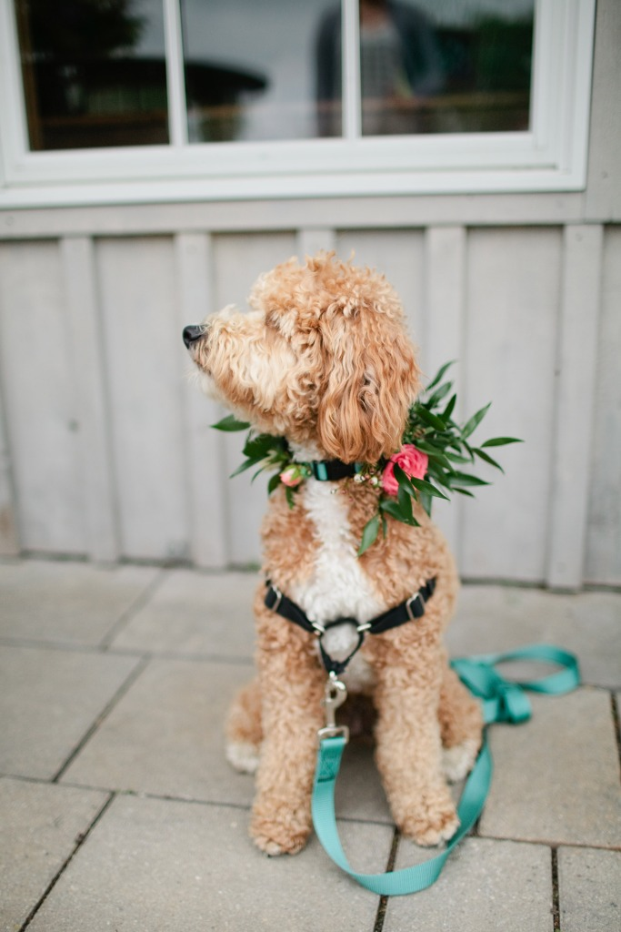 Wedding Flowers for Dogs