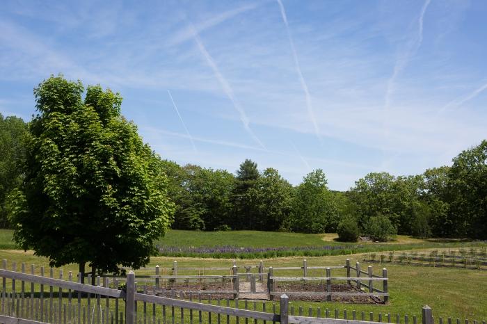Alna Maine Farms
